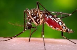 mosquito-transmite-dengue-y-zika