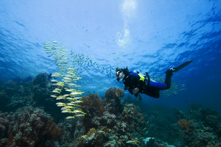 Female diver and Goatfish over a beautiful coral reef in the Red Sea Egypt