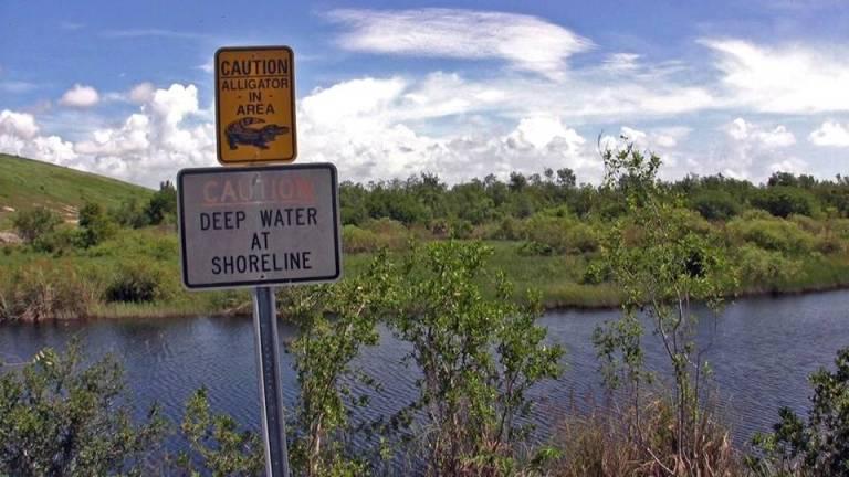 sewer plant wetlands