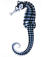 seahorse_history_dept_logo