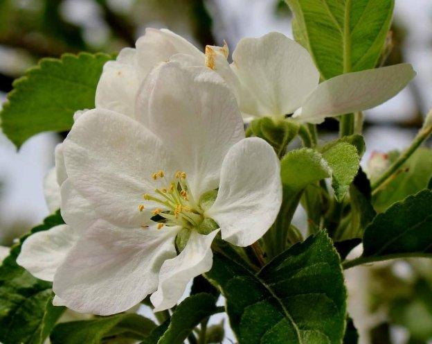 Dominican Republic's Botanical Gardens launch endangered ...
