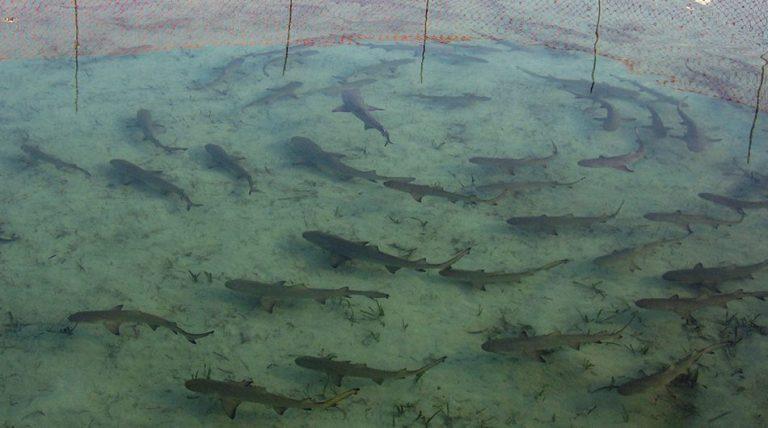 sharklab-950x530