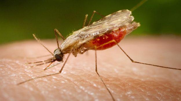 malaria-full_625x350_81434622691