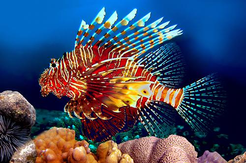 red_lionfish.jpg