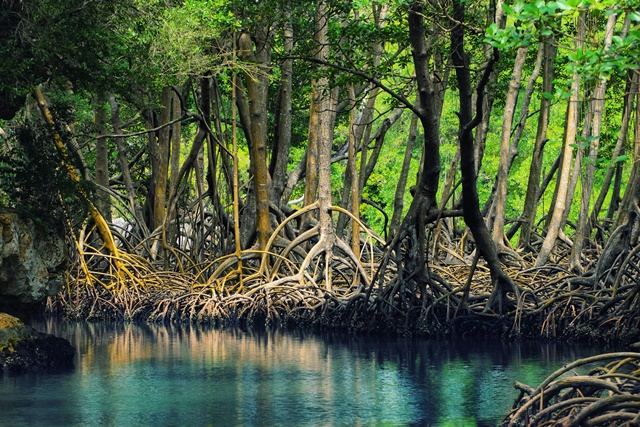 Dominican_republic_Los_Haitises_mangroves-deleted-3a0414f2fa1a4b1def31dcbed956120f.jpg
