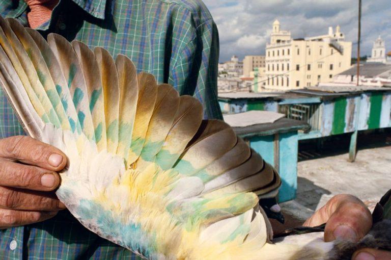 RNWebb.Havana2008-300-e1482187142392.jpg