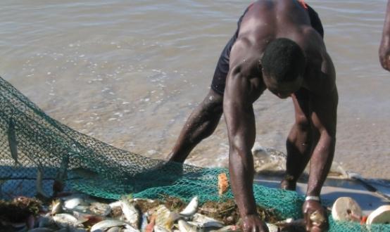 cropcm554x330_953-fisherman.jpg