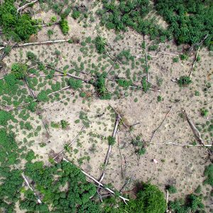 drones_cassava-300x300.jpg