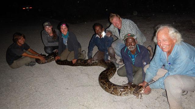 python-8_g