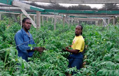 caribbean-exporters-cl01_s