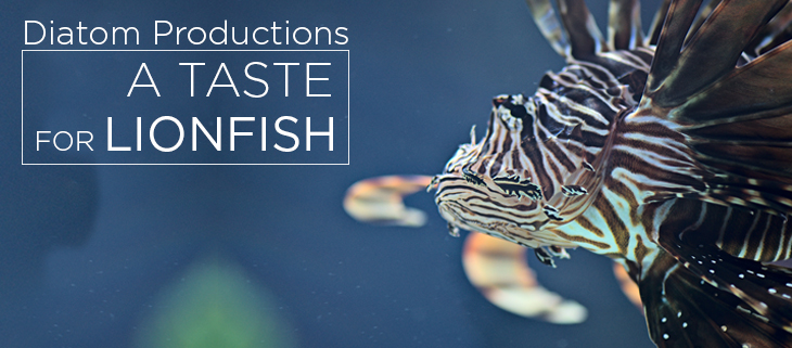 island-conservation-preventing-extinctions-a-taste-for-lionfish-feat