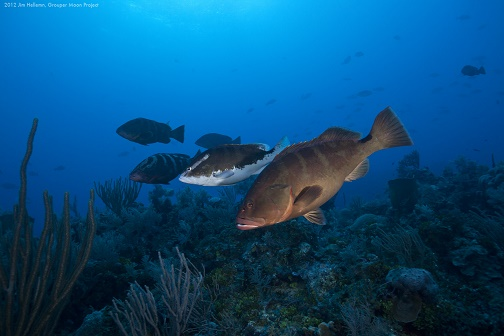 Grouper Moon Project February 2012