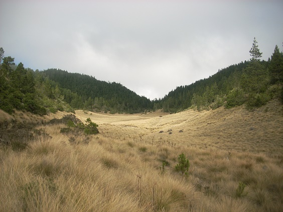 valle-nuevo-national-park1