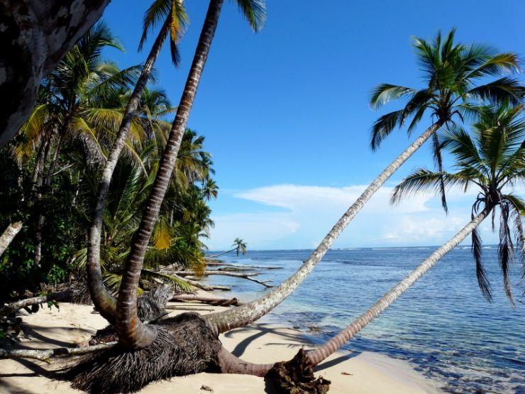 full-palms-cahuita-caribbean-costa-rica