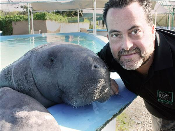 tony-mignucci-with-a-manatee-copyright-puerto-rico-manatee-conservation-center_c04d889deae185cf6ced49967b1e7439.nbcnews-ux-600-480