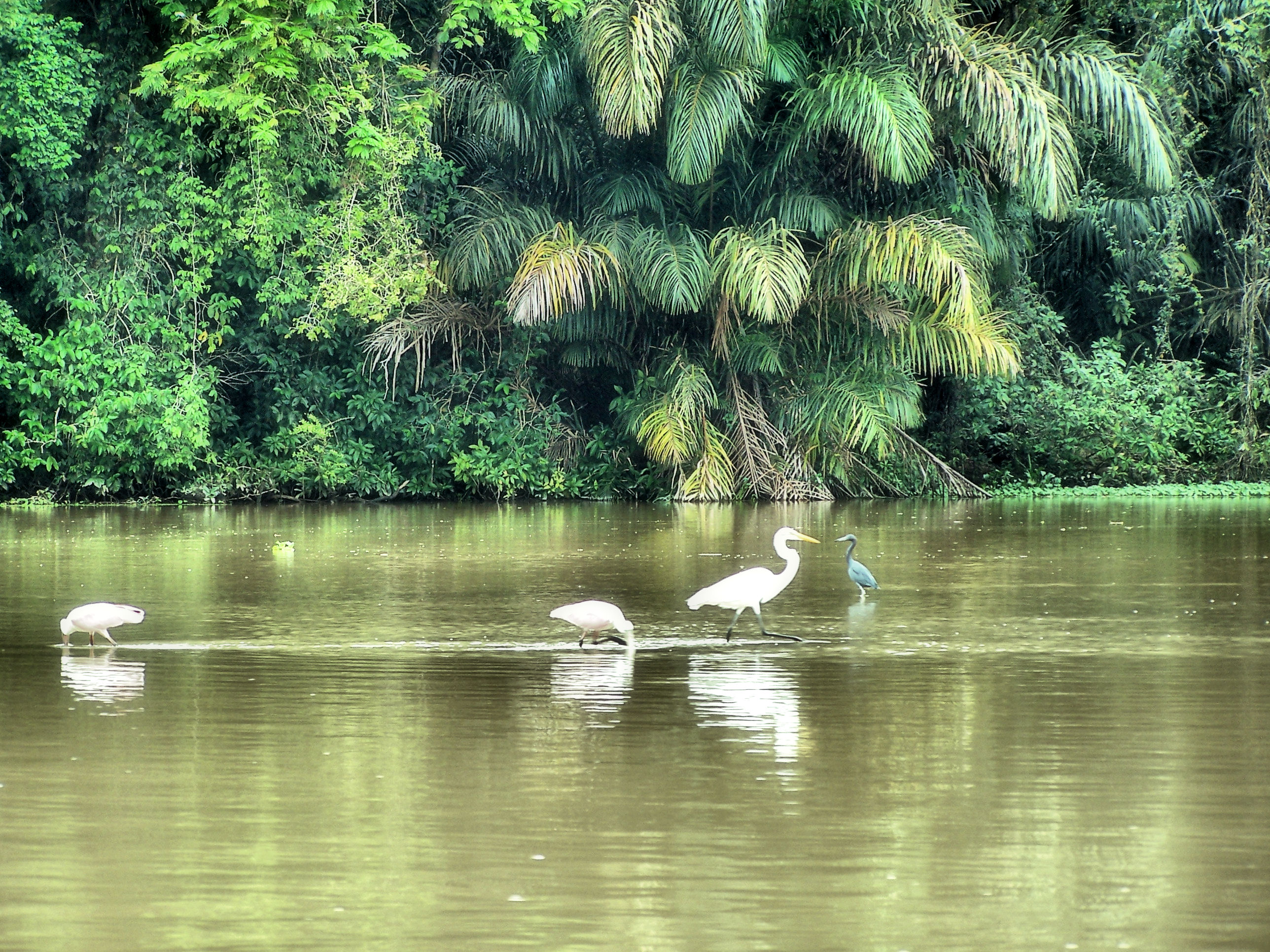 Tortuguero National Park In Costa Rica Faces Contamination
