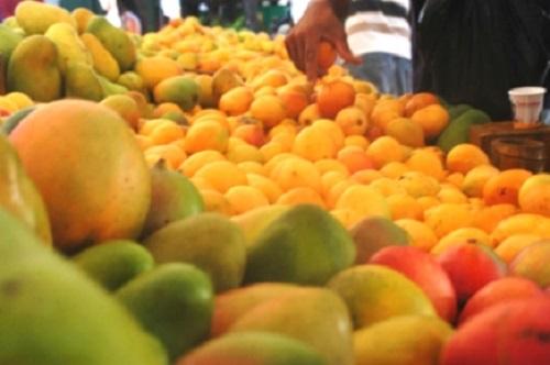 mangos-varieties