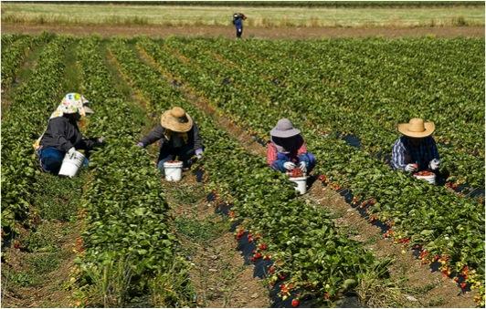 barbadosagriculture.jpg