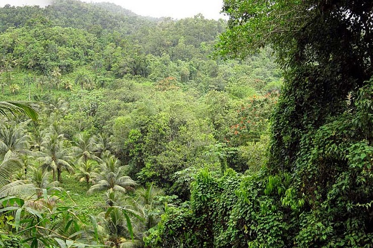 jamaica-forests