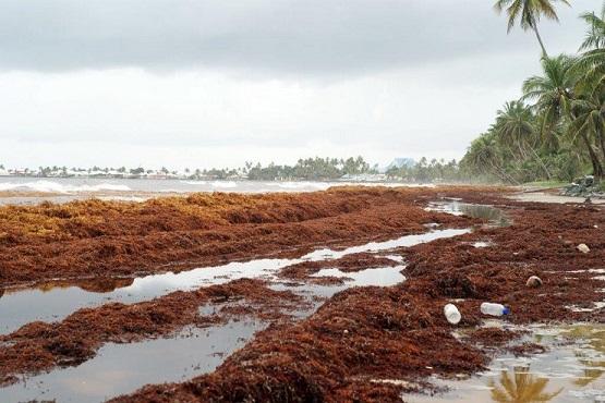 sargassum-trinidad-and-tobago