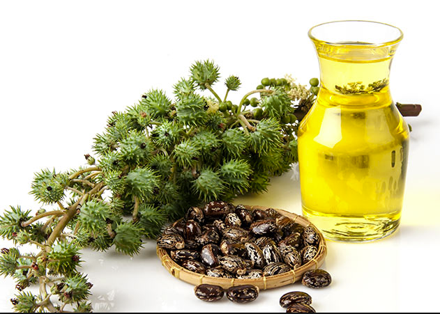 Jamaica developing castor oil industry for exports and investments ...