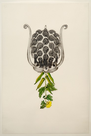 gardner_hibiscus_esculentus_sibyl