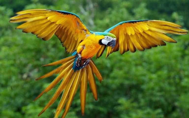 macawl100617.jpg