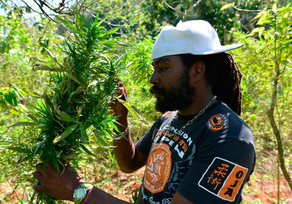 caricom-marijuana-consultation-cl01_z