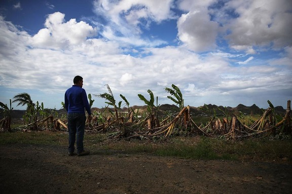puerto-rico-banana-farm-GettyImages-856828436.adapt.885.1