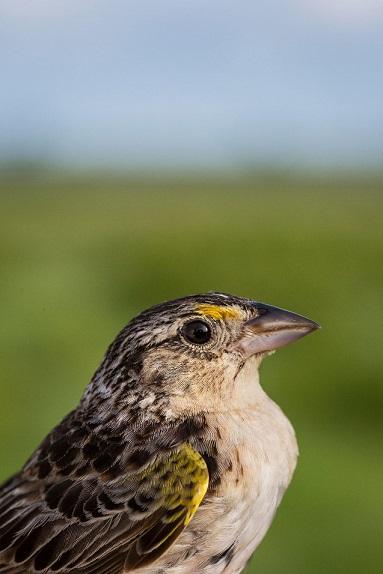 sparrowweb3_macstone-6679