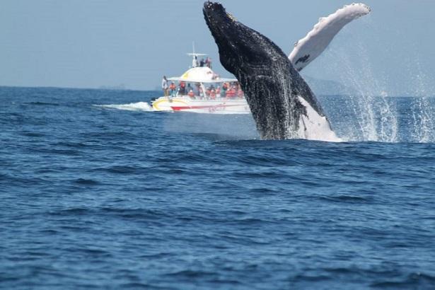 Humpback-whale-turist-boat-768x512