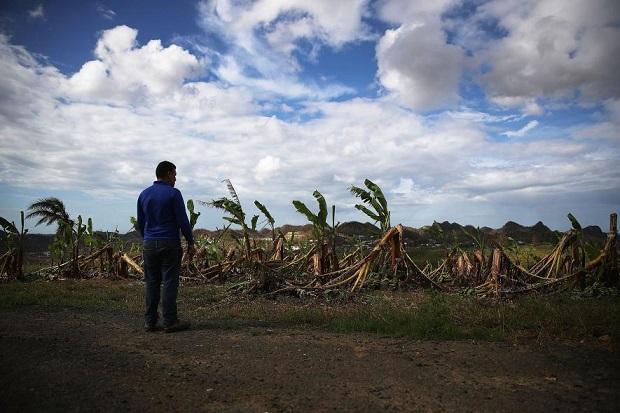 puerto-rico-banana-farm-GettyImages-856828436.adapt.885.1