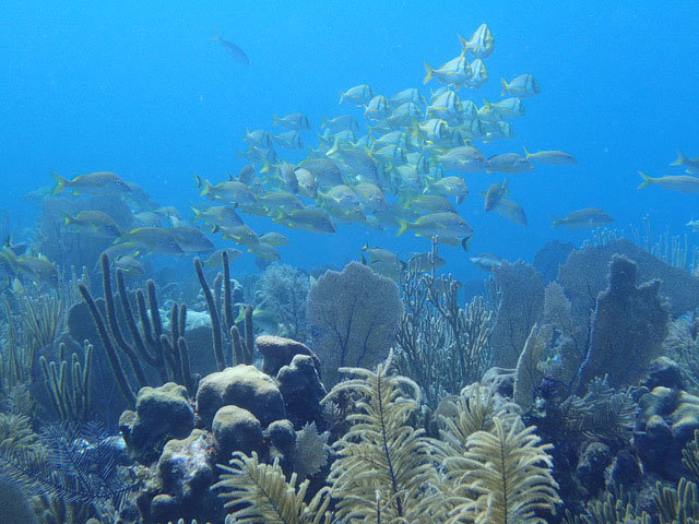 Reef_Gardens-of-the-Queen_Cuba_Apprill.jpg