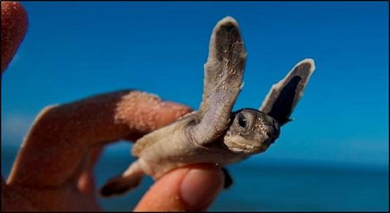turtle3a6-87fbbbe825a1