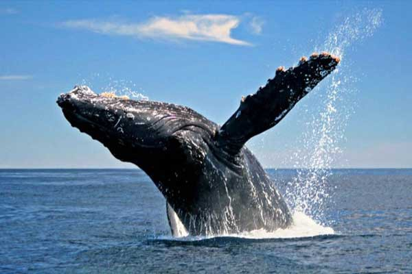 samana-humpback-whales-explorer-by-plane-punta-cana-now-368