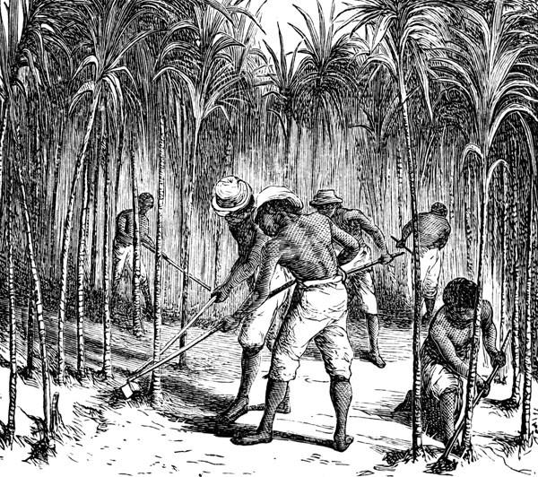 slaves.7c46285c