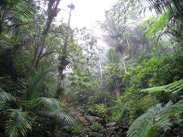 Rain_Forest