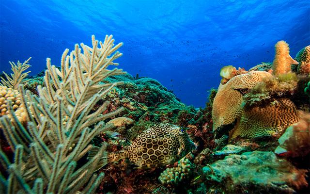 st-vincent-grenadines-coral-re.jpg