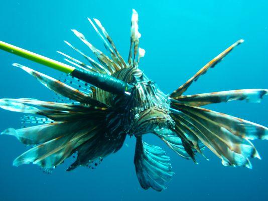 635538361565410263-lionfish