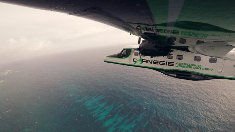AFox_CaribReefSurvey_Plane.jpg