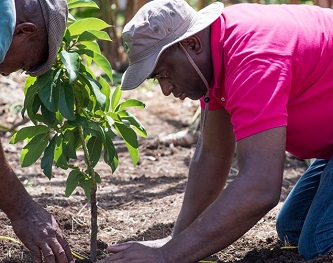 PM_Planting_Tree.jpg