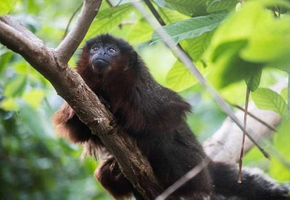 primatesofth