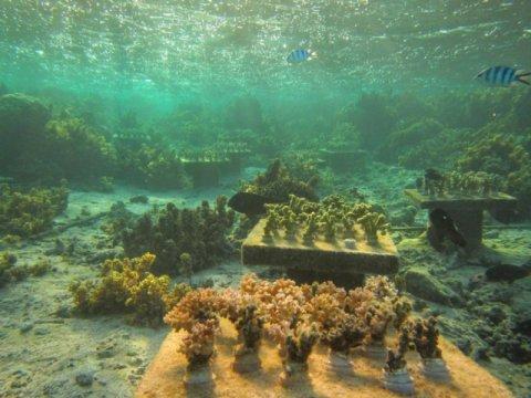 coral0.jpg