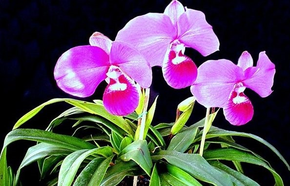 Orquídeas-03-655x381