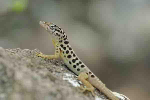 SABA_Reptiles_Christian-König-SHAPE_DCNA