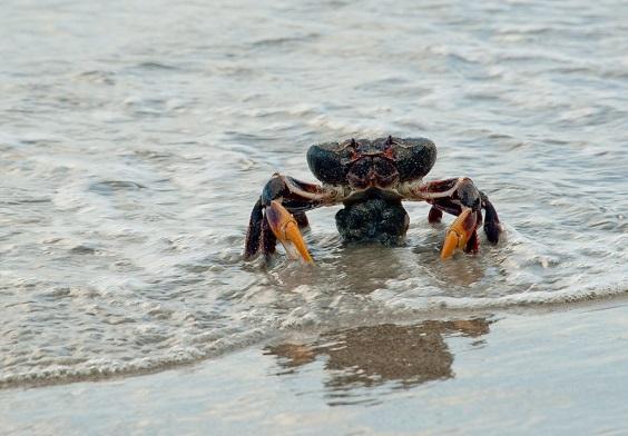 crabs1024x712