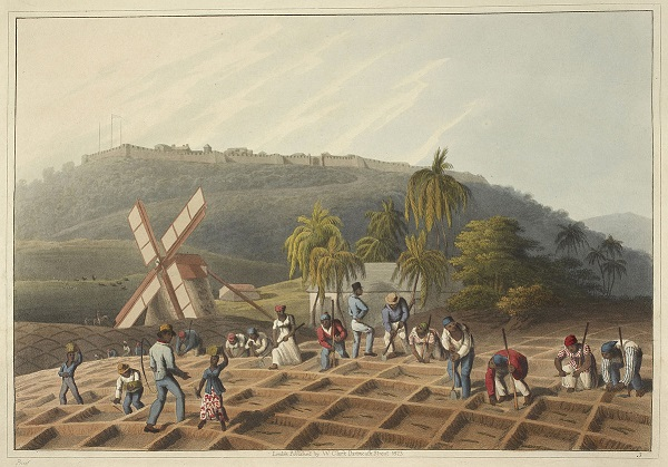 Slaves_working_on_a_plantation_-_Ten_Views_in_the_Island_of_Antigua_(1823),_plate_III_-_BL