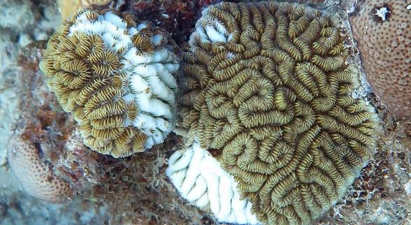 062819_CM_coral-disease_feat