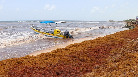 Sargassum algae is pictured along Punta Piedra beach in Tulum in Mexico's state of Quintana Roo