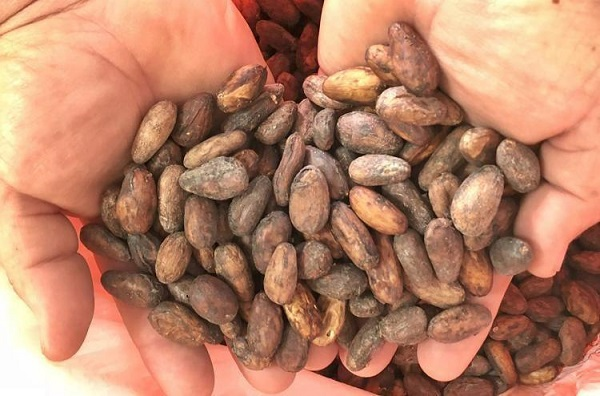 cocoa.image